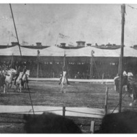 Horses performing at the Mineola Fair Grounds, possibly part of Buffalo Bill Cody's Wild West show